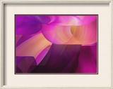 Purple 2 Framed Photographic Print by Chris Harvey