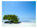 Florida Lonely Tree Prints by Melanie Viola