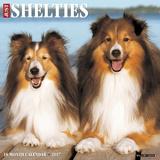 Just Shelties - 2017 Calendar - Takvimler