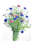 Cornflowers Giclee Print by Christopher Ryland