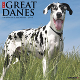Just Great Danes - 2017 Calendar Kalendarze