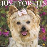 Just Yorkies - 2017 Calendar Calendars