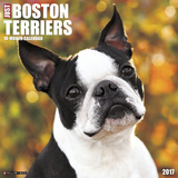 Just Boston Terriers - 2017 Calendar Calendars