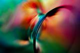 Vase Fotografisk trykk av Ursula Abresch