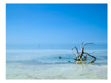 Florida Lonely Root Giclée-trykk av Melanie Viola