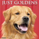 Just Goldens - 2017 Calendar Kalenders