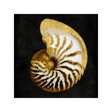 Golden Ocean Gems II Giclee Print by Caroline Kelly