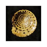 Golden Ocean Gems IV Giclee Print by Caroline Kelly