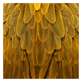 Feathered Friend - Golden Giclee Print by Julia Bosco