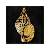 Golden Ocean Gems III Giclee Print by Caroline Kelly