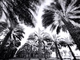 Spinning Palms Prints by Chip Forelli
