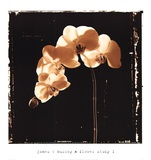 Flower Study I Prints by James T. Murray