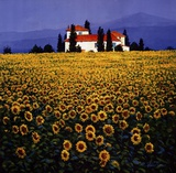 Sunflowers Field Print by Steve Thoms