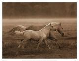Prairie Run Affiches par Robert Dawson