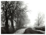 Misty Tree-Lined Road Poster by Stephen Rutherford-Bate