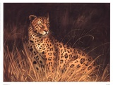 Spotted African Cat Poster by Kilian