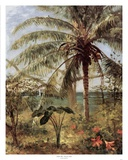 Palm Tree, Nassau 1892 Posters by Albert Bierstadt
