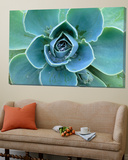 Succulent Echeveria Prints by Clay Perry