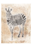 African Zebra Prints by Jace Grey