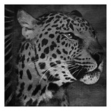 Animal Instincts Black And White Mate Print by Jace Grey