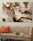 Driftwood Posters by Matthew Oldfield