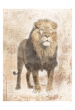 African Lion Prints by Jace Grey