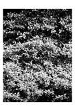 Beach Foliage 6 Prints by Jeff Pica