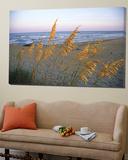 Strandscene med havpastoraler Posters av Steve Winter