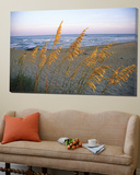 Beach Scene with Sea Oats Posters by Steve Winter