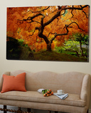 Maple Tree in Autumn Posters by John McAnulty