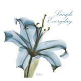 Laugh Everday Lily A36 Prints by Albert Koetsier