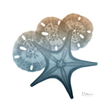 Steel Hues Starfish and Sand Dollar Prints by Albert Koetsier