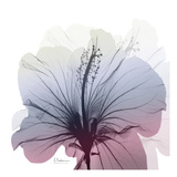 Tasty Grape Hibiscus Print by Albert Koetsier