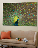 The Peacock Prints by Art Wolfe