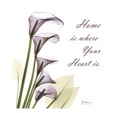 Calla Lilies Home Prints by Albert Koetsier