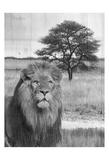 Jungle King Plakater af Sheldon Lewis