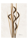 Aged Oat Grass Prints by Albert Koetsier