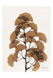 Aged Ginko Poster by Albert Koetsier