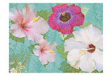 Hibiscus Flowers Prints by Jeffery Cadwallader