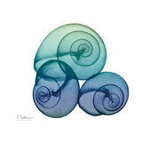 Sea Sky Snails Art by Albert Koetsier