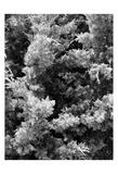 Beach Foliage 3 Prints by Jeff Pica
