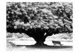 LA Arboretum Posters by Jeff Pica