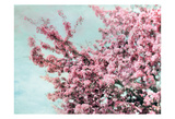 Blossoming Spring Print by Tracey Telik