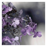 Plum Foliage 1 Poster by Tracey Telik