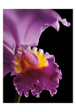 Purple Orchid Prints by Barry Seidman
