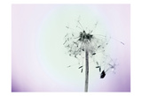 Wishes On A Wind Prints by Tracey Telik
