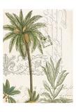 Palm Rectangle 1 Prints by Elizabeth Jordan