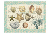 Sea Shell Collection Prints by  Ophelia & Co.