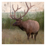 Elk Stride Print by Kimberly Allen