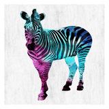 Zebra Elegance Print by Sheldon Lewis